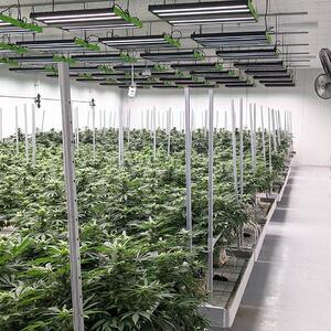 Commercial grade cannabis led grow light financing